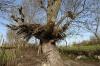 Родопско приспособление за сено